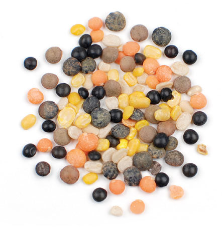 Mulit-Colored Lentils
