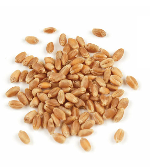 Hard Red Winter Wheat Berries