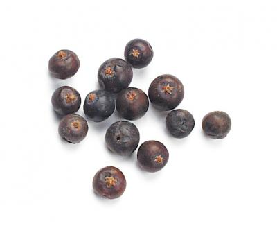 Jumbo Juniper Berries