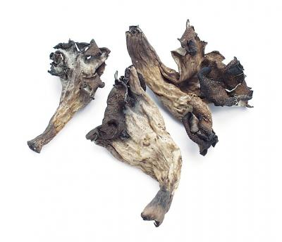 Black Trumpet Mushrooms